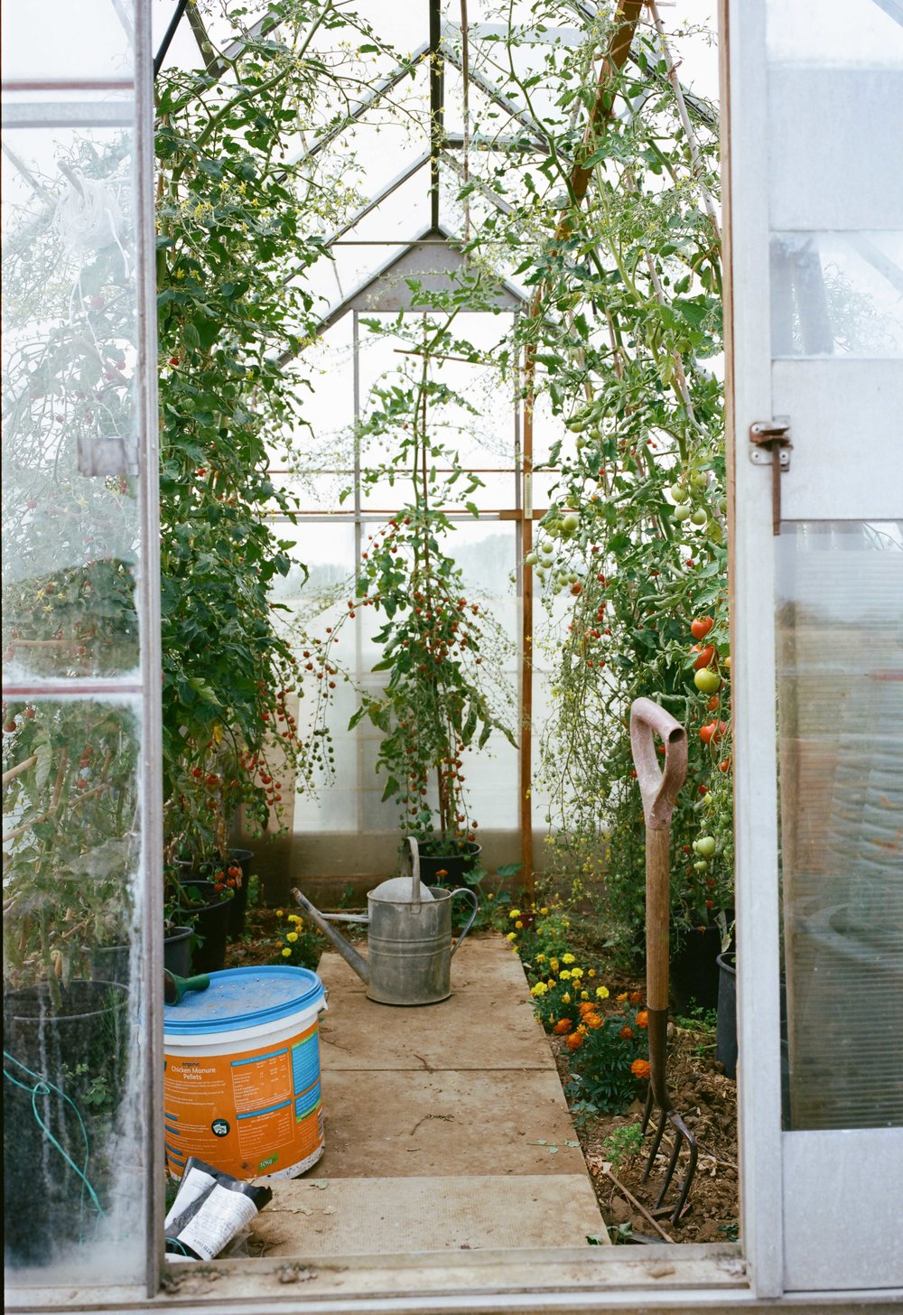 allotments (55 of 56).jpg