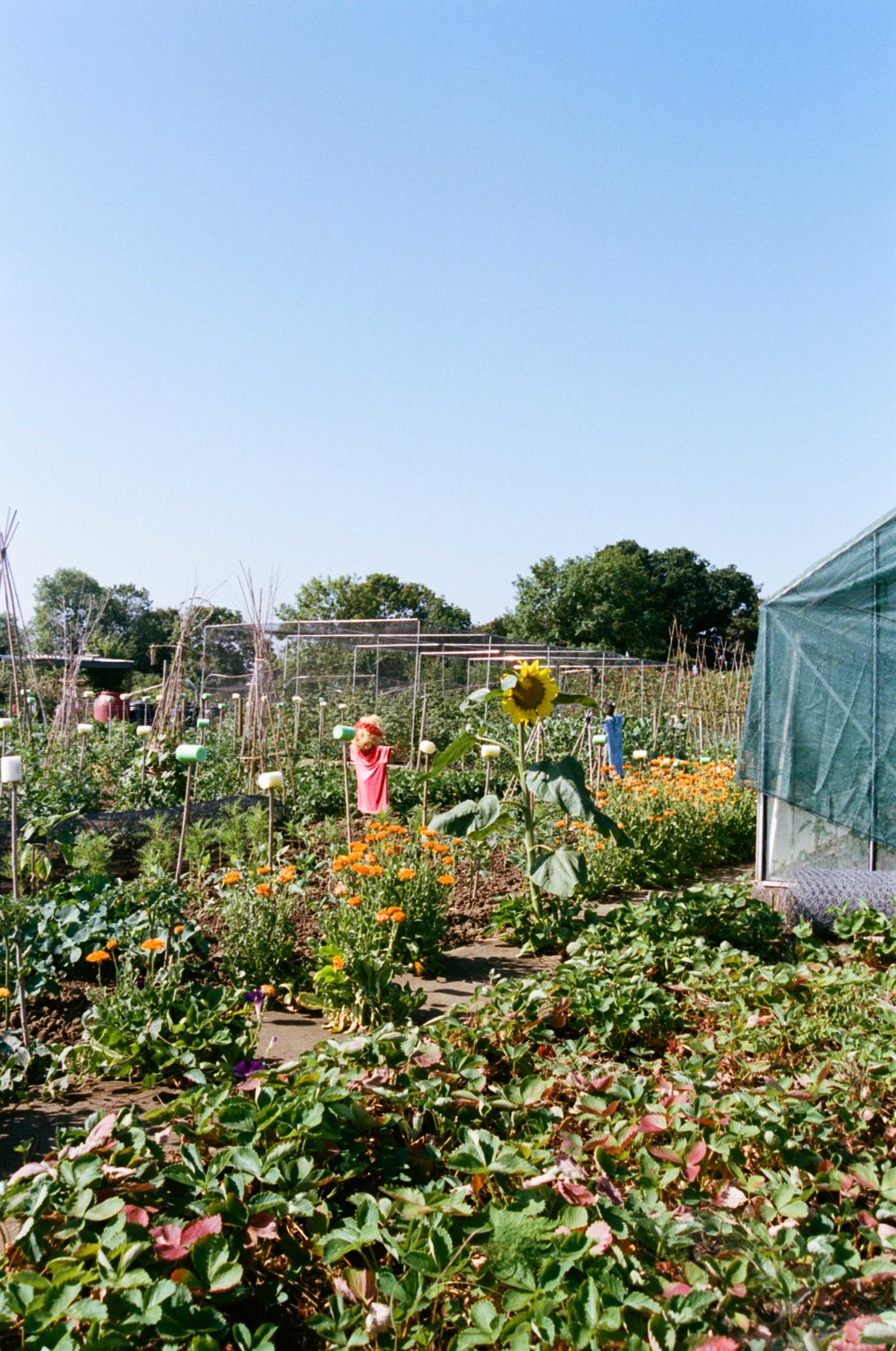 allotments (47 of 56).jpg