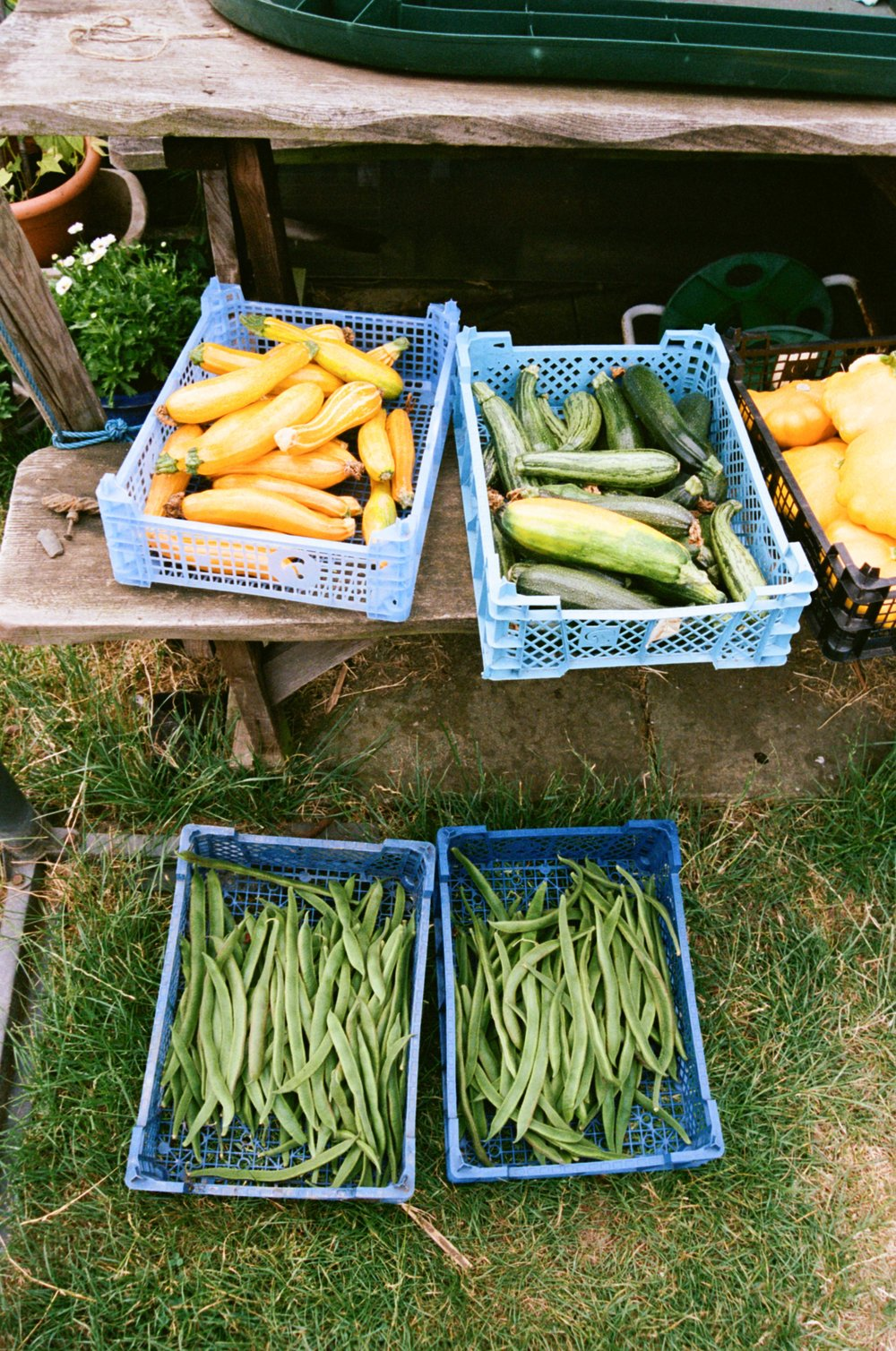 allotments (12 of 56).jpg