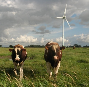 rural wind energy