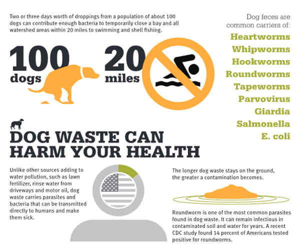 Infographic via Doody Calls outlining the dangers and health risks of dog poop which is a toxic pollutant.
