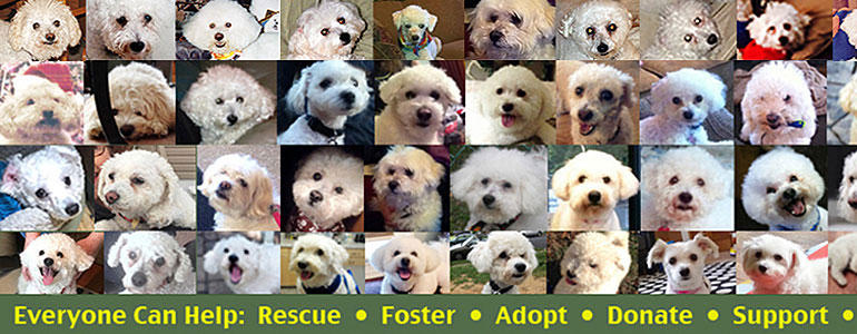 Bichon Frise Rescue of Northern NJ helps Bichons find foster families, adoptions, donations and more.