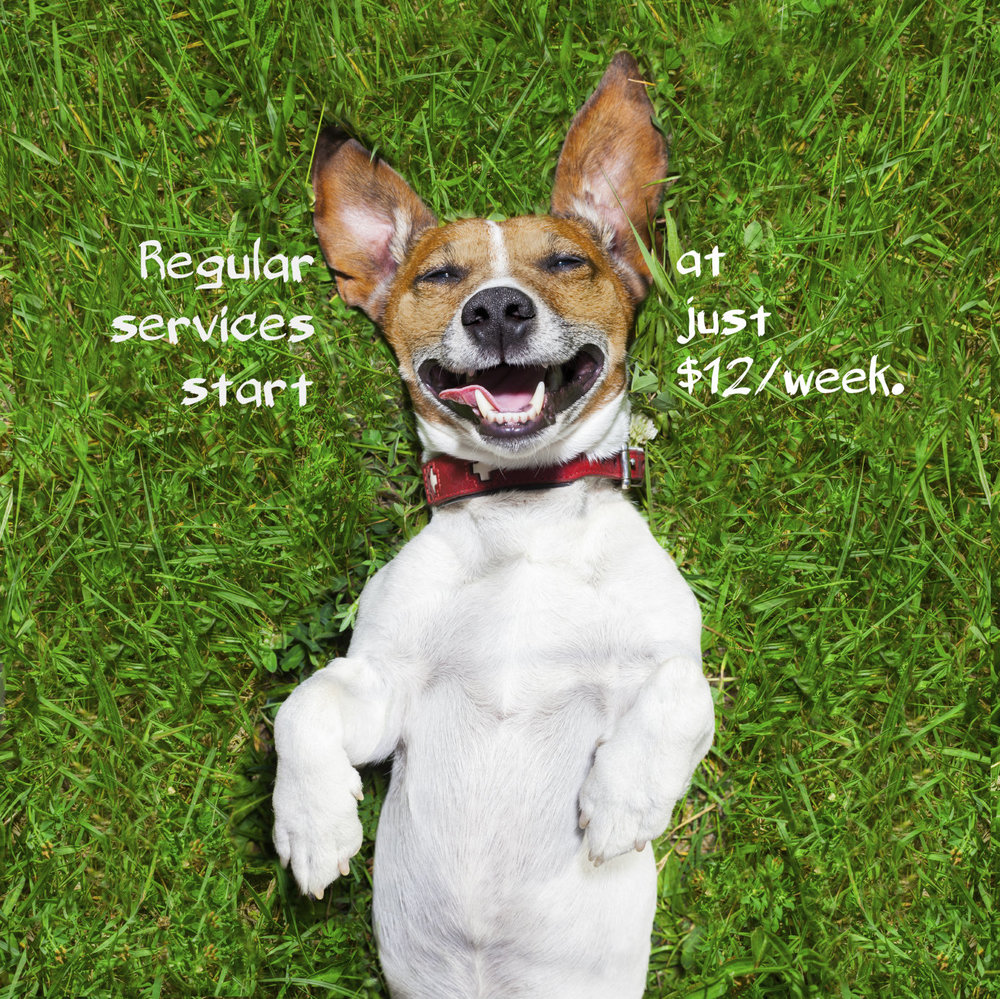 Regular poop scooping services are incredibly affordable.  Don't get caught with a yard full of poop!