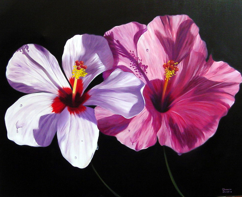 Hibiscus Duet