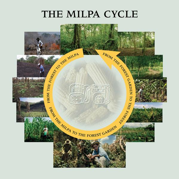 milpa - www.mayaforestgardeners.org