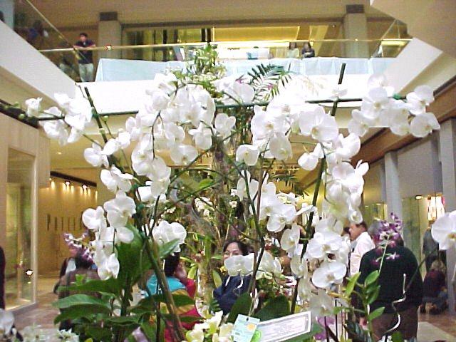 www.orchidideas.com