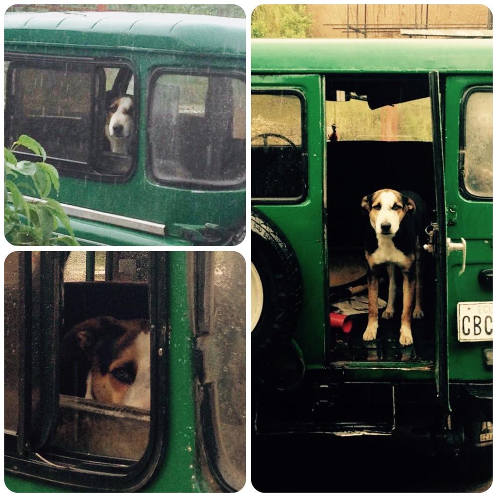 dmckesq-gitano-dog-truck.jpg