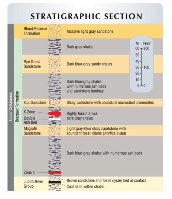 dmckesq-ammolite-stratigraphic