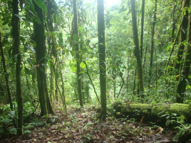jungle-forest.jpg