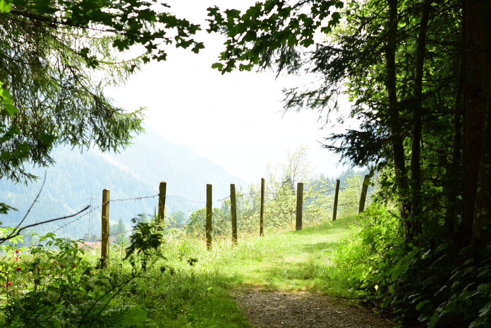 Waldweg, Flachau July 2015