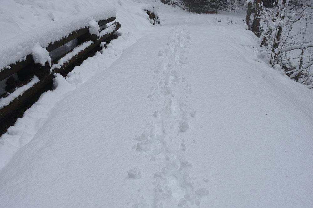 Flachau, 28th of april 2017 - my steps...