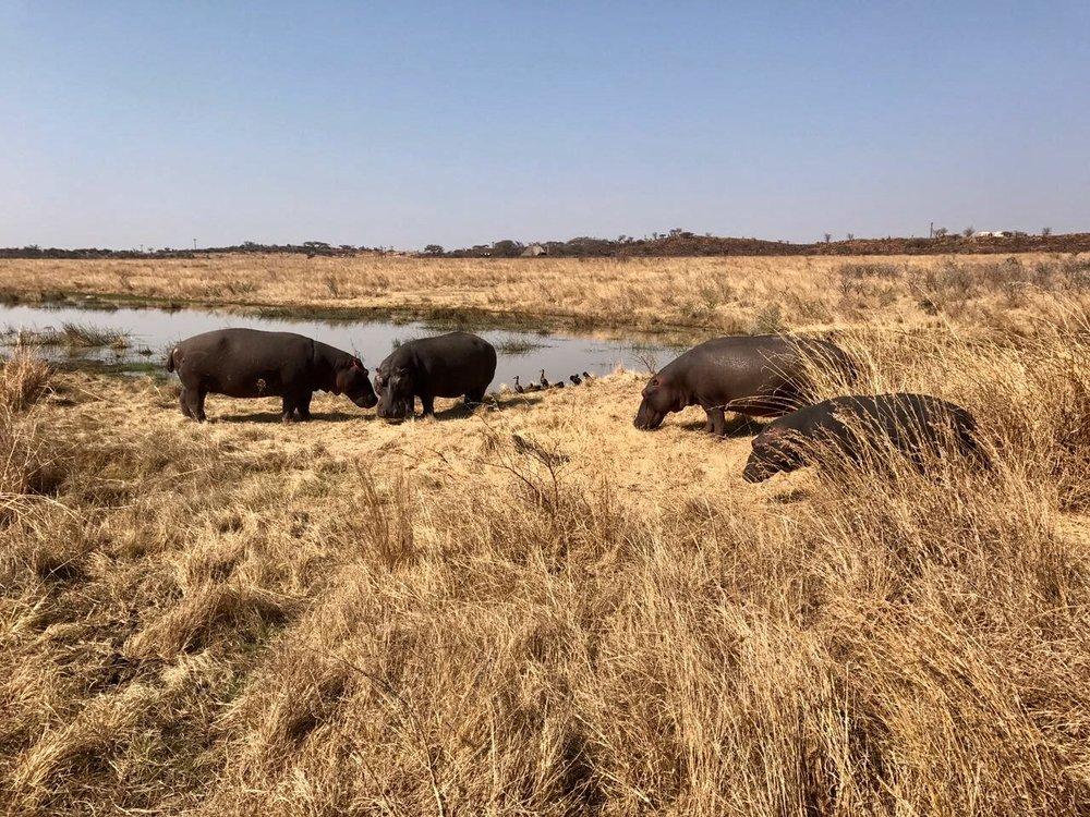 Nambiti Game Reserve, September 2017