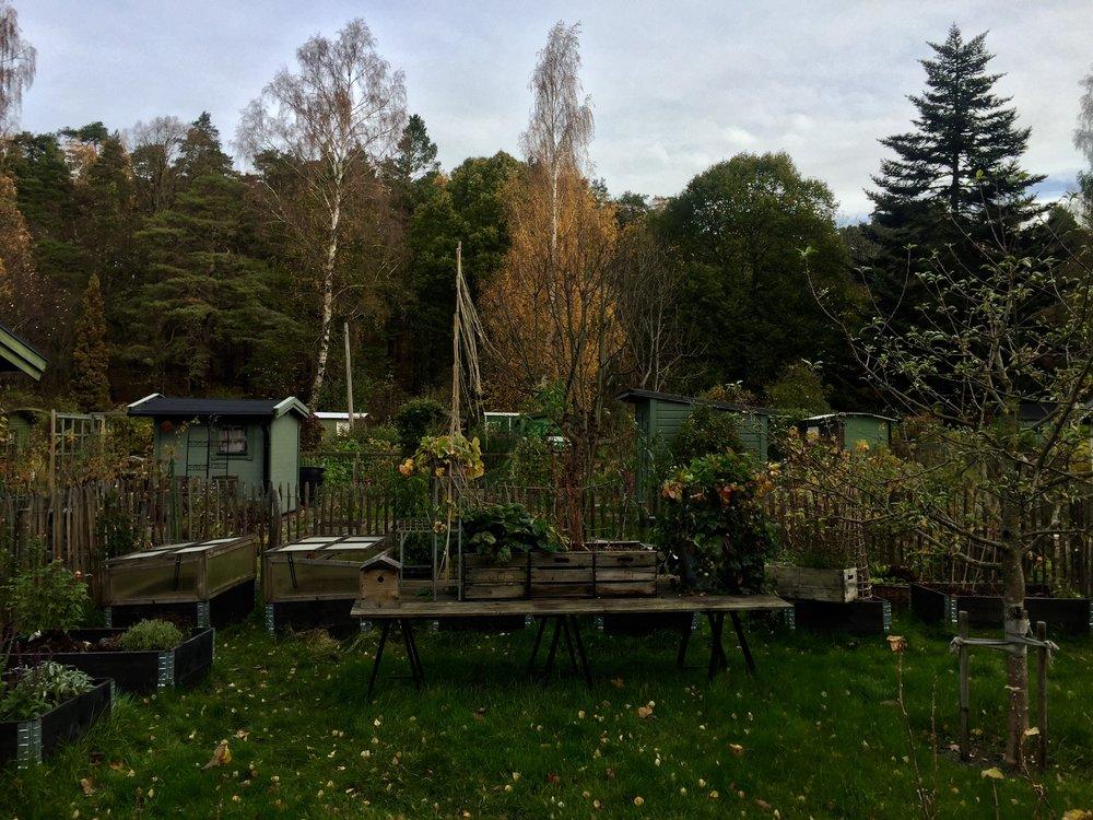 Söderbrunn Alotment, Stockholm, October 2018