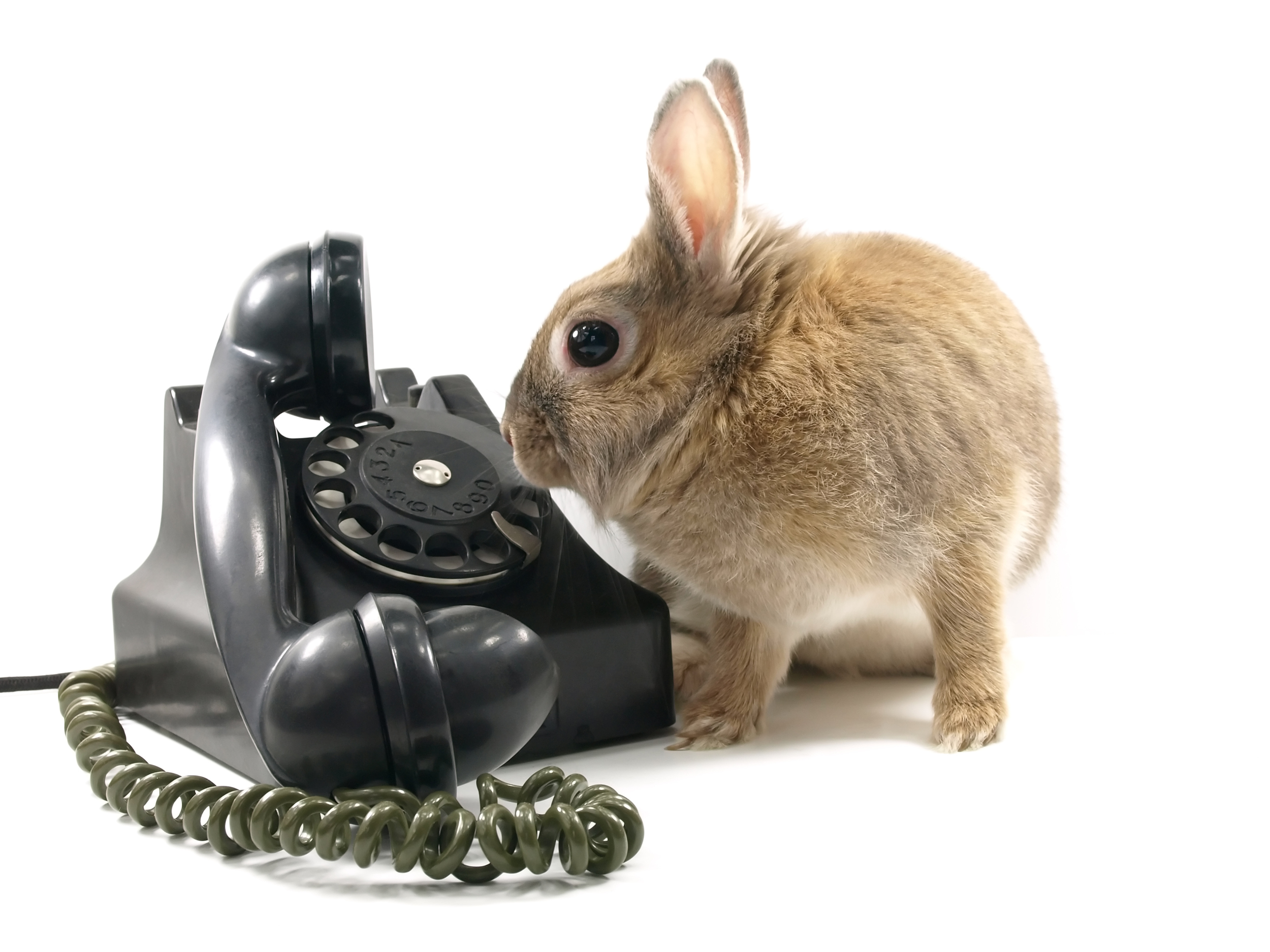 Call us! Rabbits are standing by!