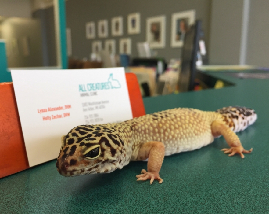 Leopard Gecko — All Creatures Animal Clinic