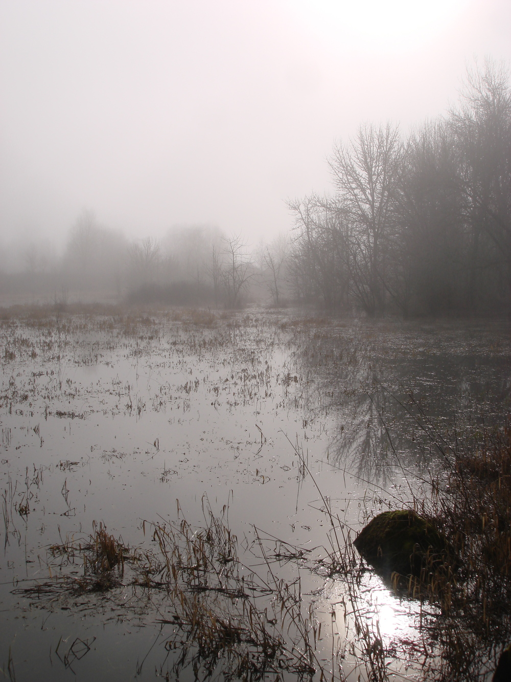 Frog Pond in the fog