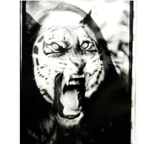 animal9.jpg