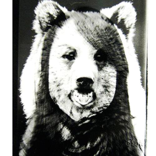 animal8.jpg