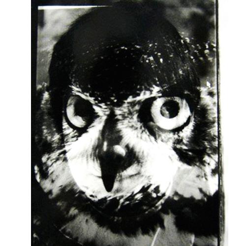 animal1 copy.jpg