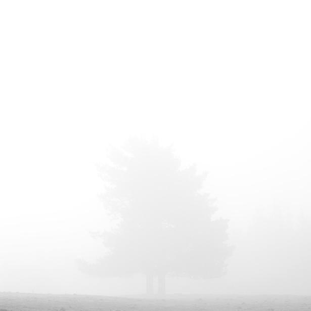 Serie_Silence_XII.jpg