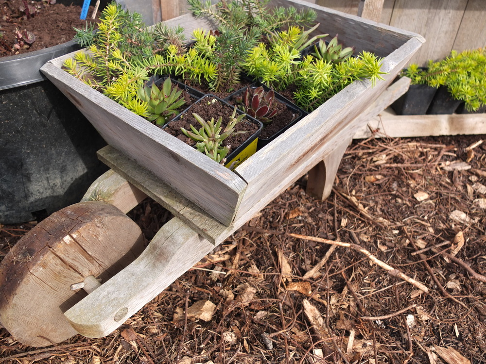 1) Use Compost In Your Soil Mix. Plants Grown In Containers Do Not Have  Access To Minerals And Other Nutrients Naturally Found In Garden Soil.