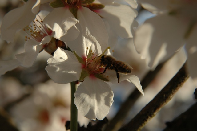 We maintain habitat for native pollinators and beneficial insects, promoting bee health and aiding in pest control.