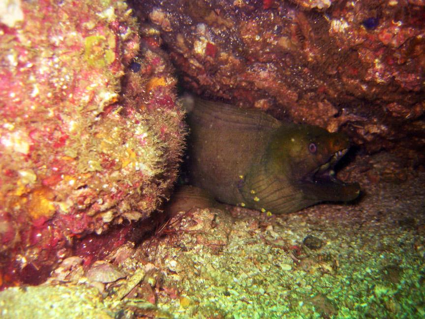 madelene-farin-costa-rica-45.jpg