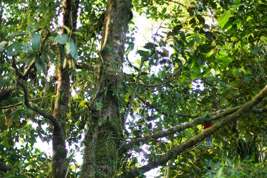 madelene-farin-costa-rica-070.jpg