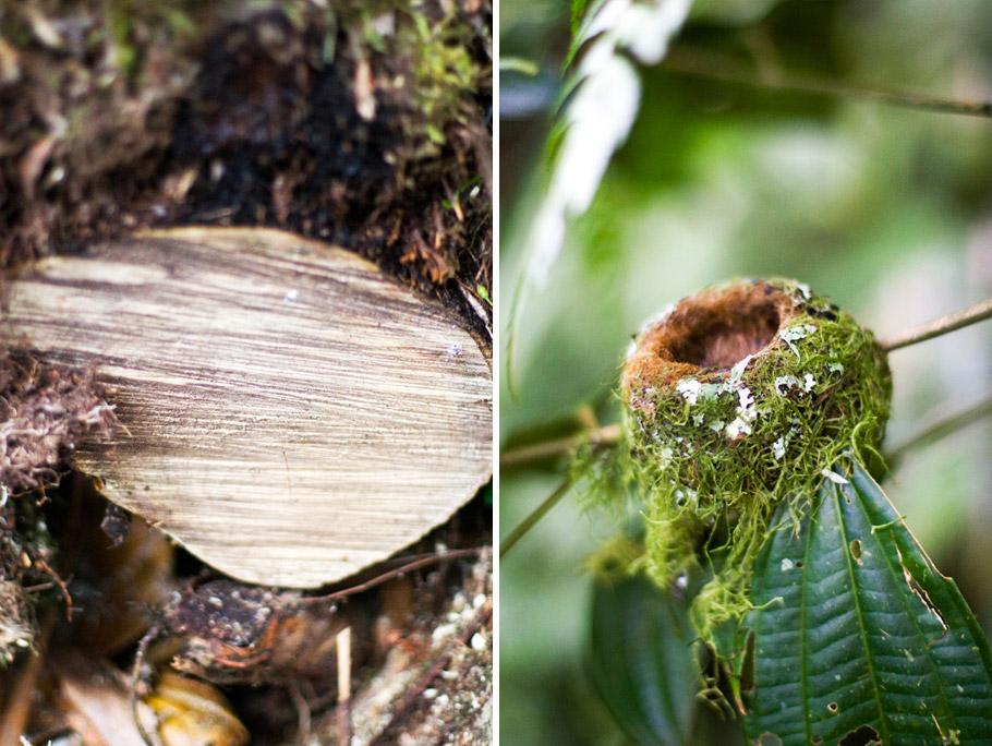 madelene-farin-costa-rica-091.jpg