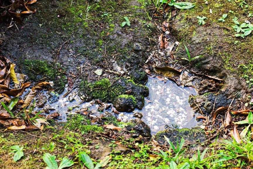 madelene-farin-costa-rica-097.jpg