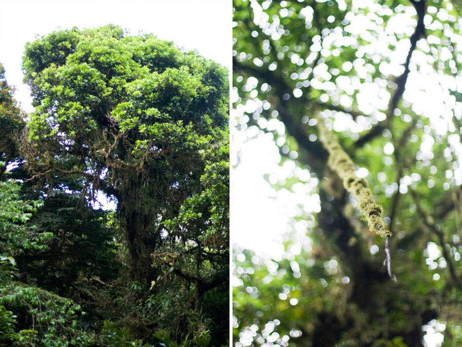 madelene-farin-costa-rica-071.jpg
