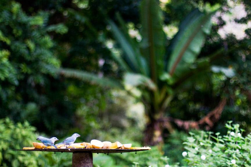 madelene-farin-costa-rica-156.jpg