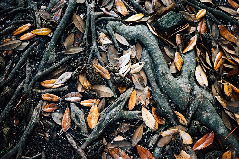 madelene-farin-new-orleans-078.jpg