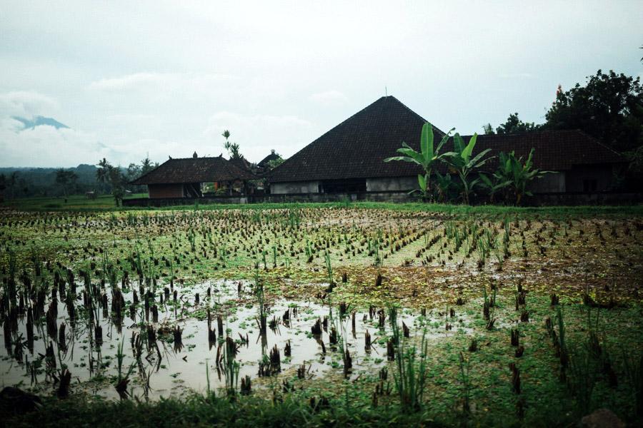 Madelene-Farin-Indonesia-0266.jpg
