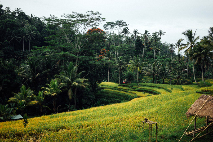 Madelene-Farin-Indonesia-0268.jpg