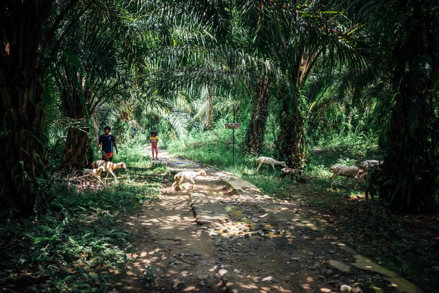 Madelene-Farin-Indonesia-0704.jpg