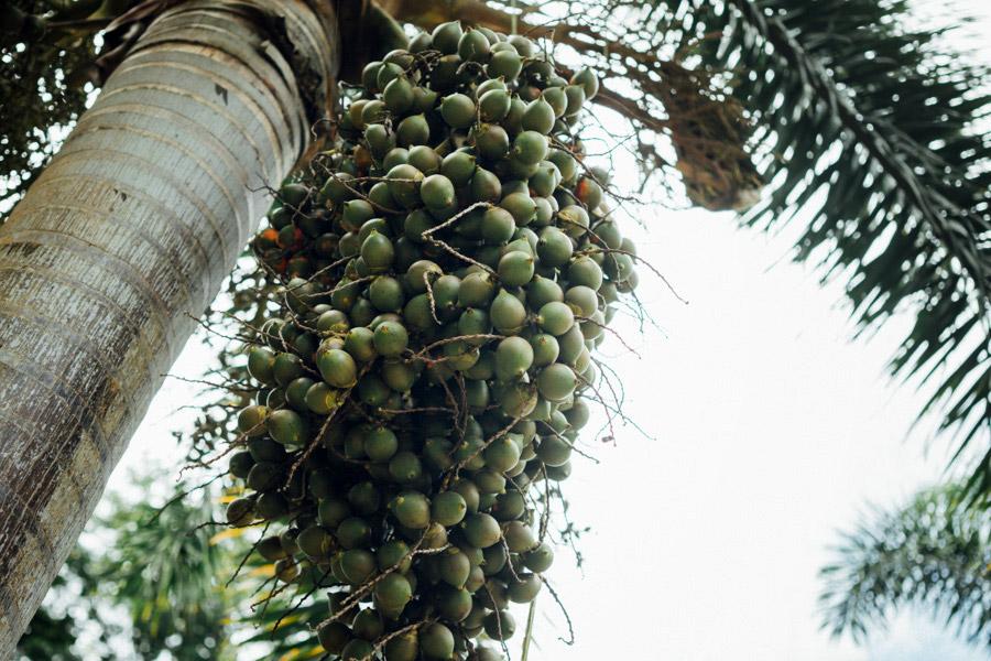 Madelene-Farin-Indonesia-0713.jpg