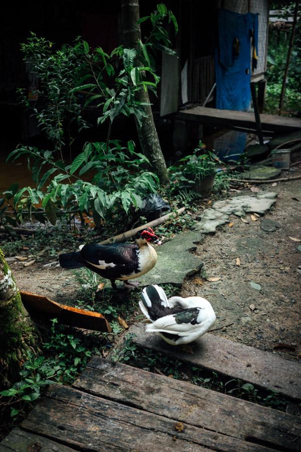 Madelene-Farin-Indonesia-0721.jpg