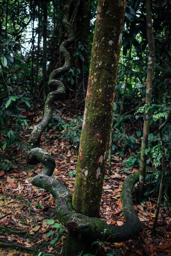 Madelene-Farin-Indonesia-0781.jpg