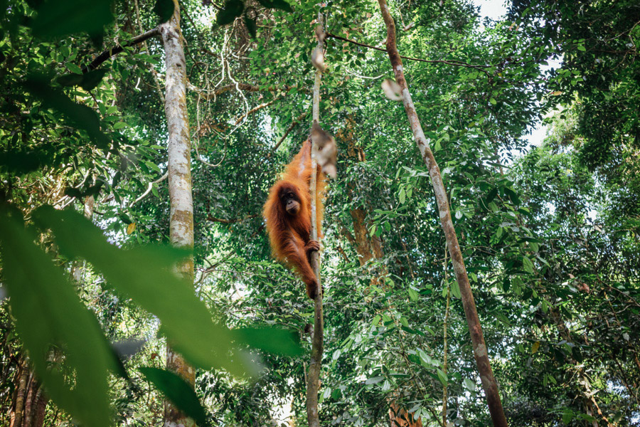 Madelene-Farin-Indonesia-0783.jpg
