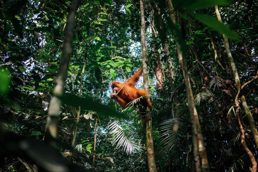 Madelene-Farin-Indonesia-0791.jpg