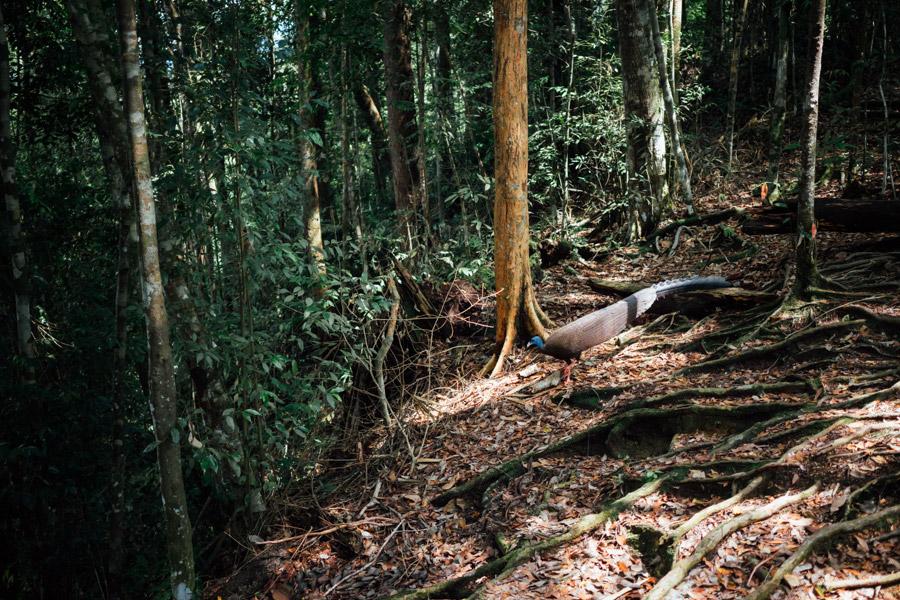 Madelene-Farin-Indonesia-0836.jpg