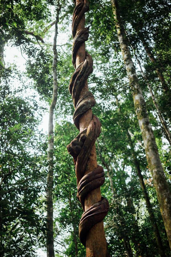 Madelene-Farin-Indonesia-0838.jpg