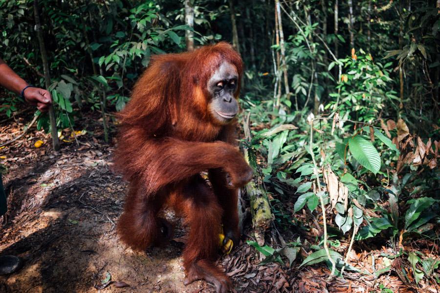 Madelene-Farin-Indonesia-0854.jpg