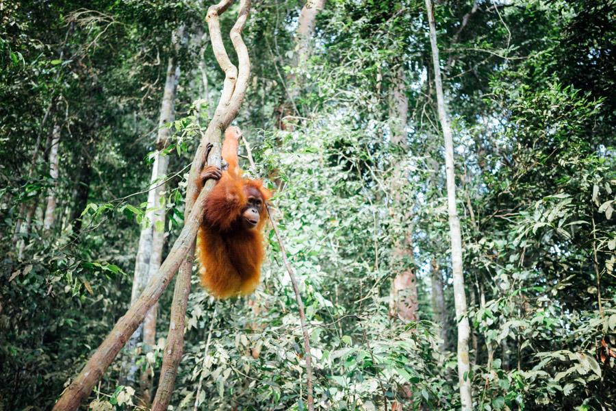Madelene-Farin-Indonesia-0856.jpg