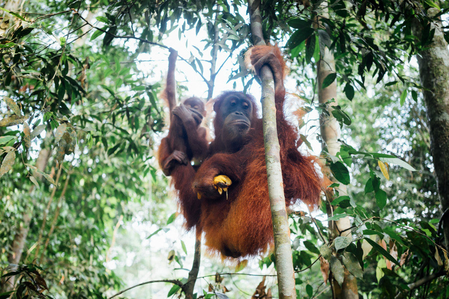 Madelene-Farin-Indonesia-0862.jpg