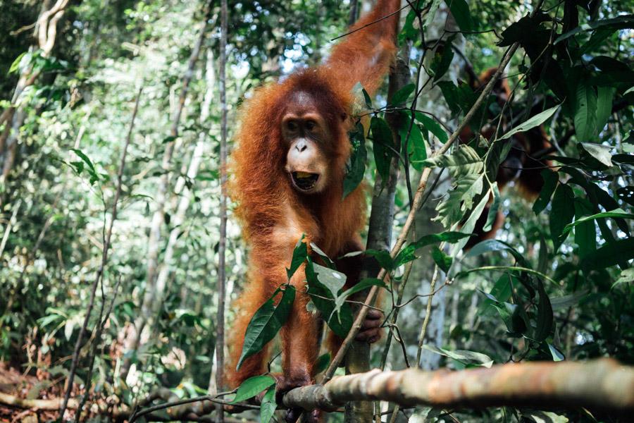 Madelene-Farin-Indonesia-0863.jpg