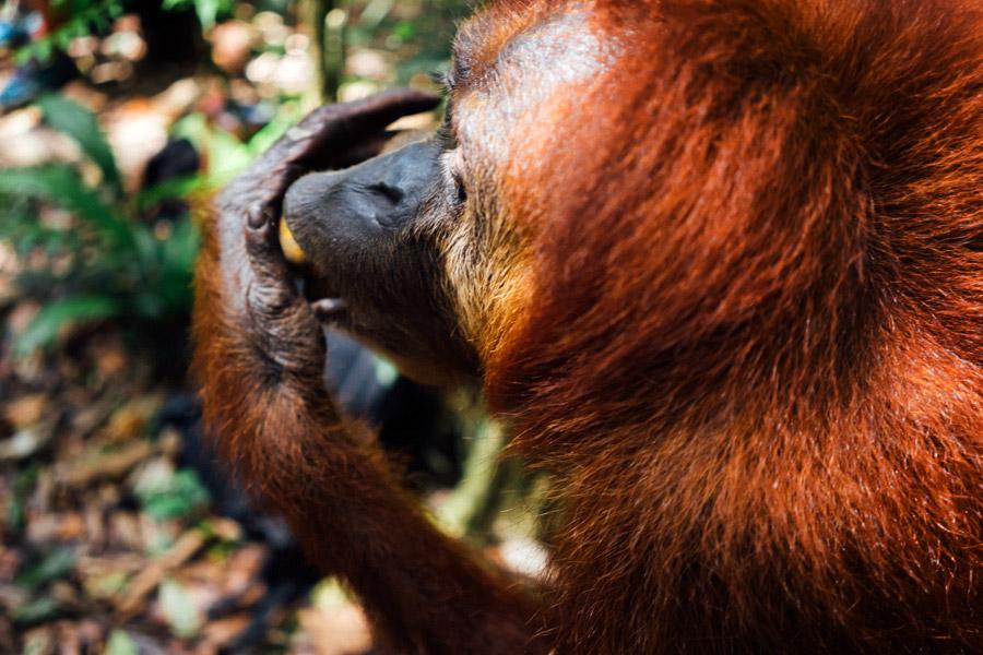 Madelene-Farin-Indonesia-0930.jpg