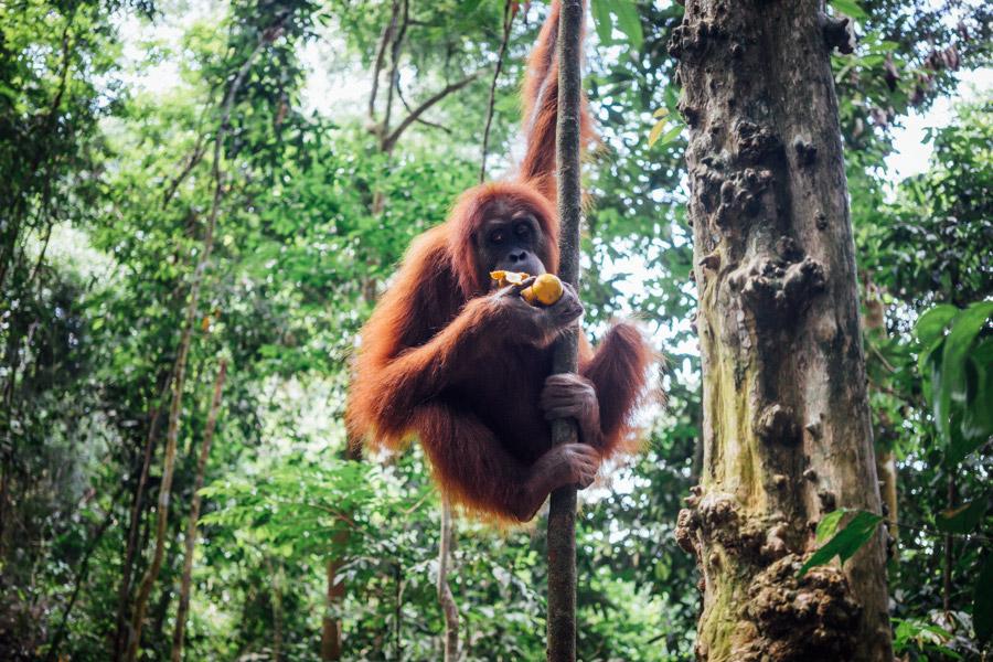 Madelene-Farin-Indonesia-0933.jpg