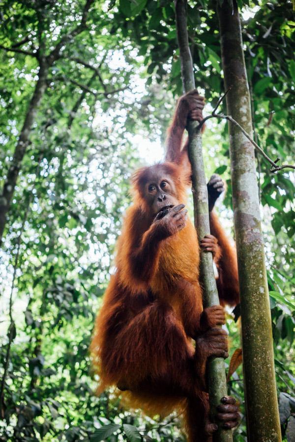 Madelene-Farin-Indonesia-0940.jpg